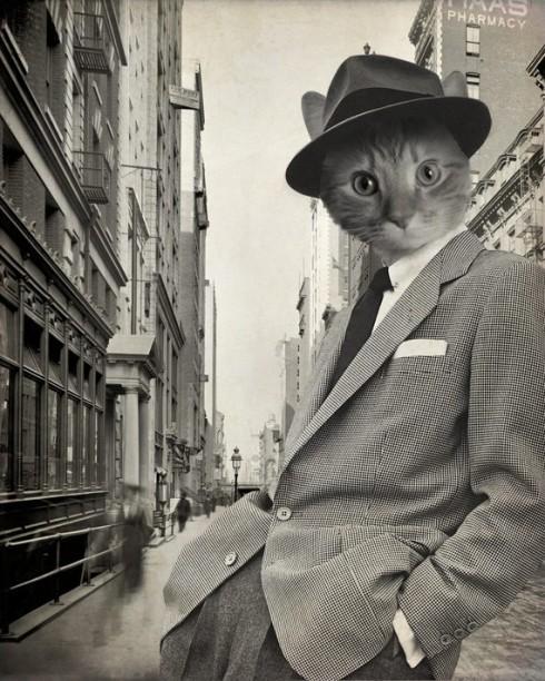 draper cat