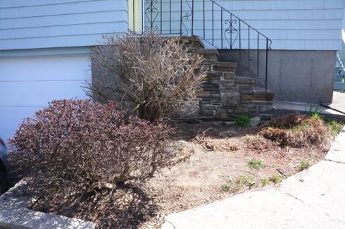w11 garden before